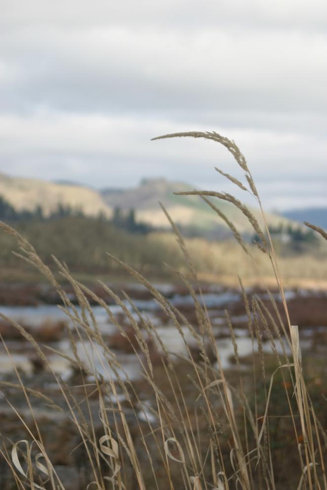 River stalks